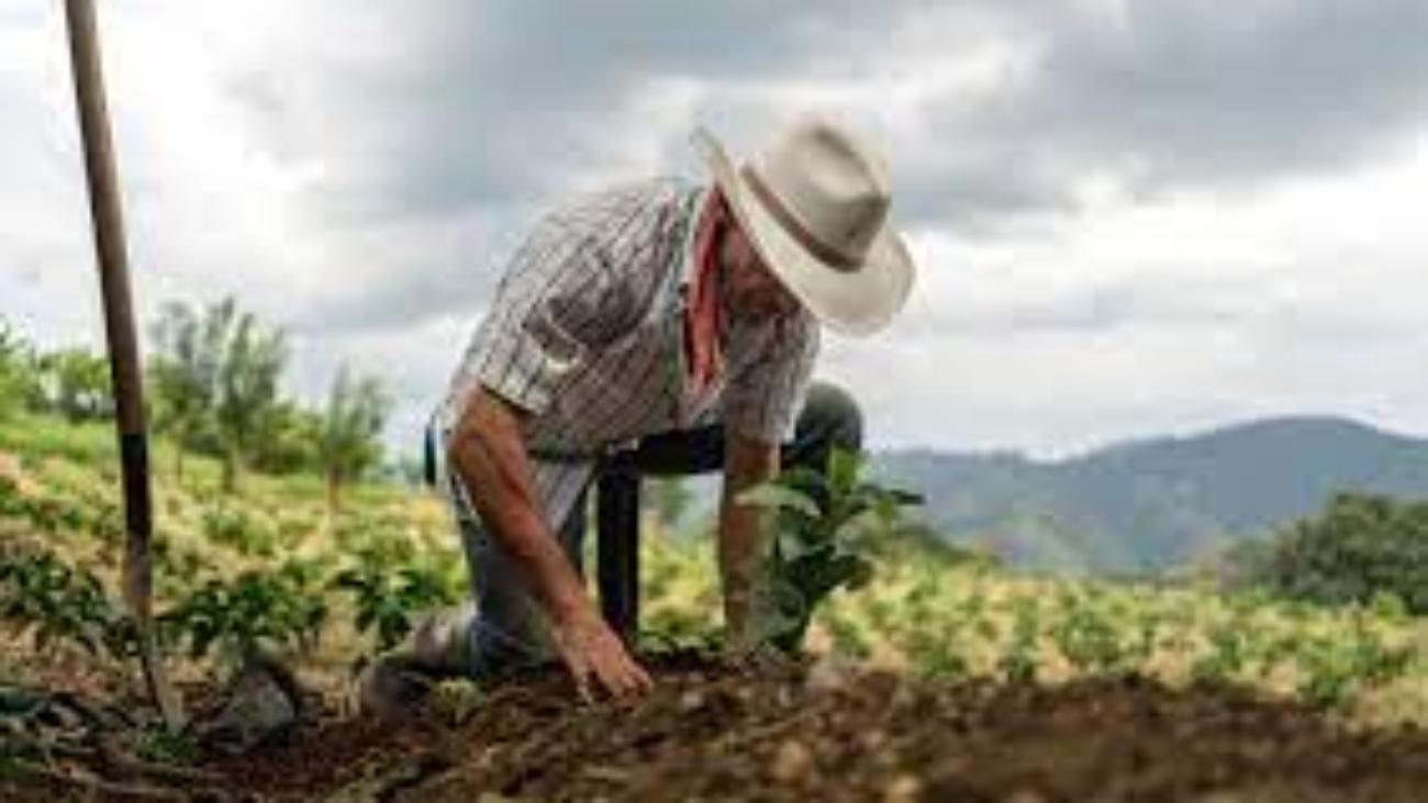 occupazione illegittima e coltivatore diretto